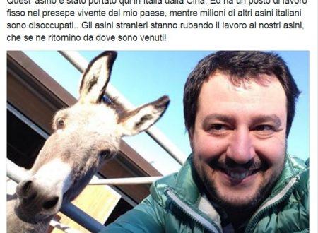 """Salvini: """"Gli asini stranieri rubano il lavoro ai nostri asini nei presepi viventi""""."""